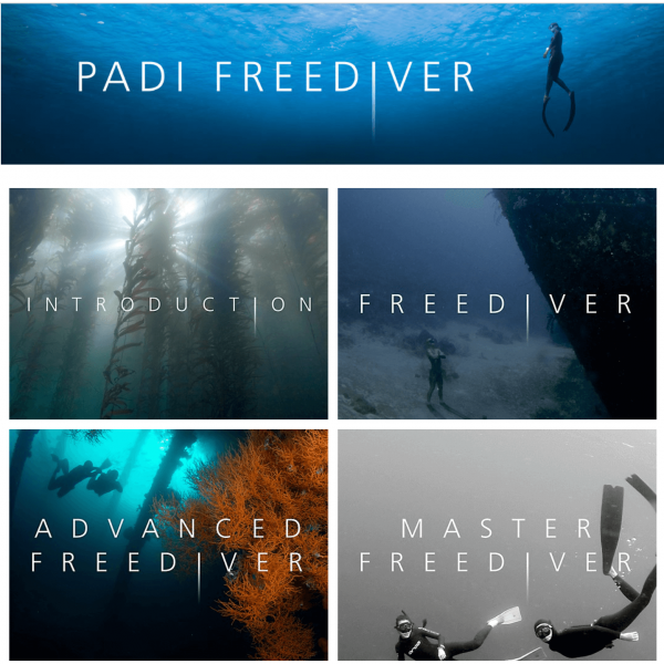 PADI Freediver touch (eLearning)